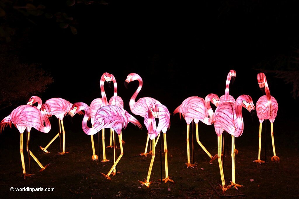 Light Festival - Flamingo