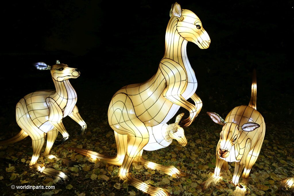 Lights Festival at Jardin des Plantes - kangaroos