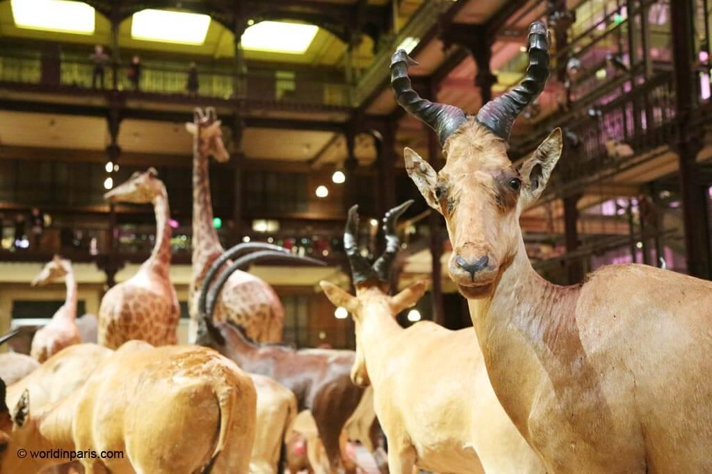 Galerie Evolution Paris 5