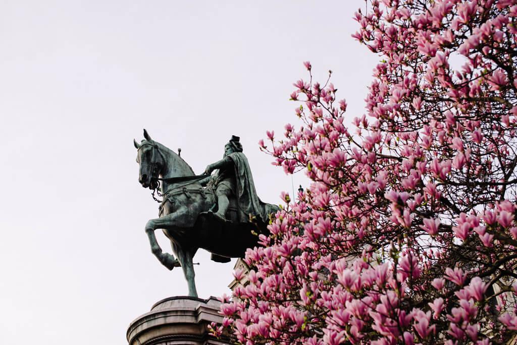 Cherry Blossoms - Hotel de Ville