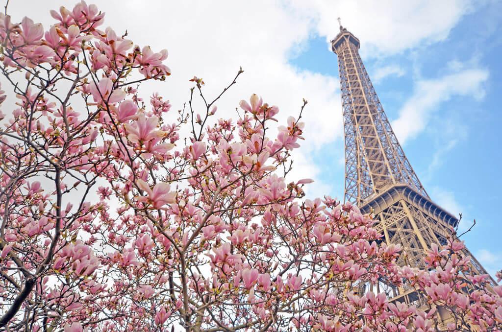 Цветущая вишня - Марсово поле Париж