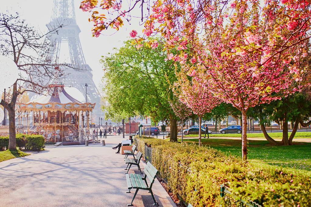Cherry Blossoms - Trocadéro Gardens Paris