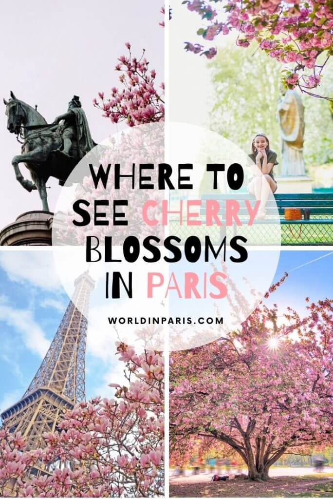 Planning to see cherry blossoms in Paris this spring? Read our Paris Cherry Blossoms guide with forecast, best times, great locations, photography tips & more