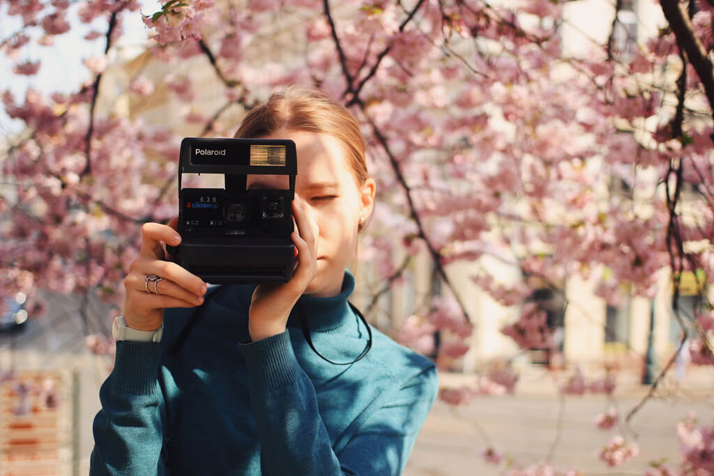 cherry blossoms photography