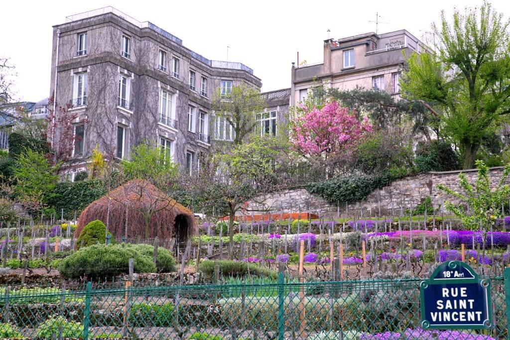 Montmartre Vineyards