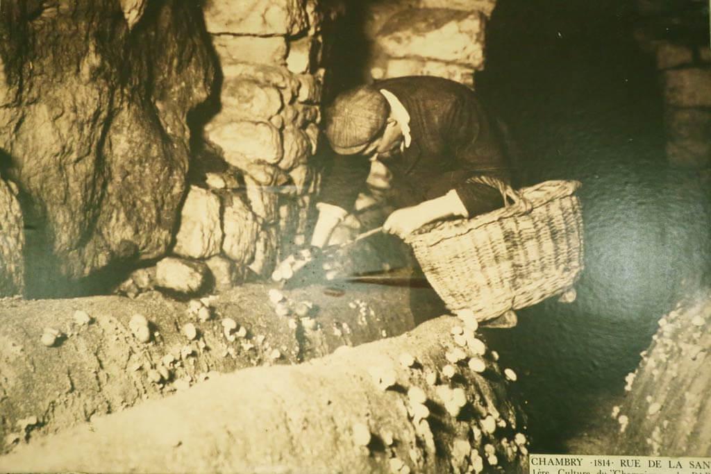 Mushroom Farming in the Quarries