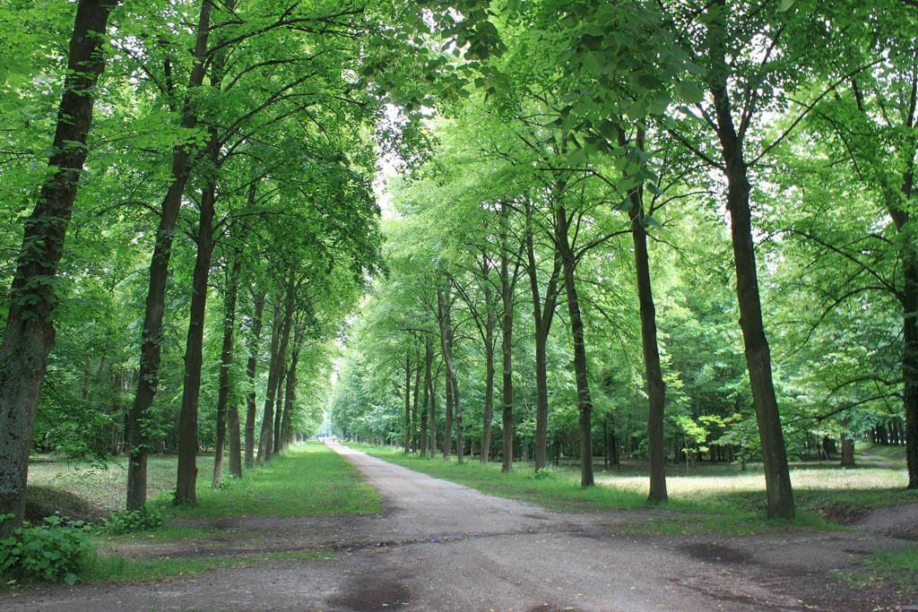 Versailles Forest